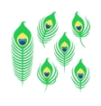 Set of peacock feathers vector image vector image