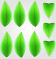 Natural leaf 01 vector image