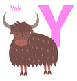 alphabet for letter y with furry yak vector image