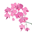 Pink orchid vector image vector image