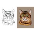 portrait bengal cat