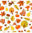 autumn leaves pattern forest yellow fall vector image vector image