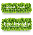 Banner with green leaves vector image vector image