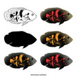 set aquarium fish isolated on white popular vector image vector image