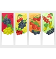 Berries Color Banners Set vector image vector image