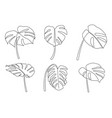 continuous line drawing monstera leaves set vector image