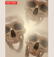 detailed graphic photorealistic human skulls vector image vector image