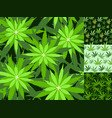 Green marijuana background