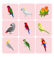 set colorful parrot icons vector image vector image