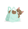 adorable grey cat sleeping in a light blue vector image