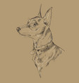 monochrome miniature pinscher hand drawing vector image vector image