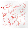 set of red human veins vector image vector image