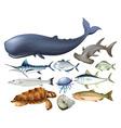 aquatic animals on white