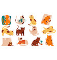 doodle cats funny home pets walking sleeping vector image vector image