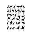 heron egret and stork bird silhouettes vector image