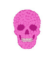 stylized pink verbena skull on white background vector image vector image