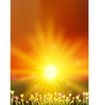 Tulips Flowers Meadow Against Sunset Sky EPS 10 vector image
