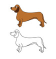 cute cartoon dachshund isolated on white vector image