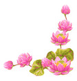 decorative element with lotus flowers water lily vector image vector image