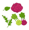 different green and red vegetables vector image