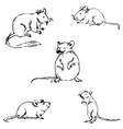 Mice A sketch by hand Pencil drawing vector image vector image