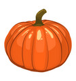 thanksgiving pumpkin isolated on white vector image vector image