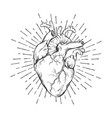 hand drawn human heart with sunburst vector image vector image