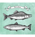 ink sketch of pink humpback salmon vector image