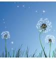 realistic dandelions vector image