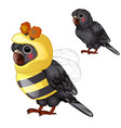 cute black parrot in bee costume isolated on a vector image vector image