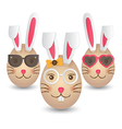 Easter bunny eggs vector image