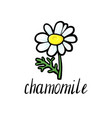 flower of chamomile vector image