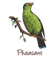 pheasant color vector image vector image