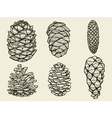 Pine cones of cedar spruce fir christmas tree vector image