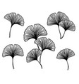 ginkgo biloba leaves and branches set vector image vector image
