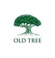 oak tree concept logo template vector image vector image