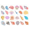 tropical seashell cartoon clam oyster vector image