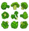 broccoli icon set cartoon style vector image vector image