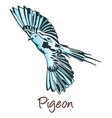 pigeon color vector image vector image