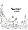 template verbena 3 vector image vector image