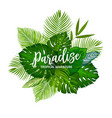 tropical palm tree leaves and herbs vector image