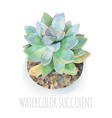 watercolor succulent modern vector image vector image