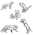 Tigers A sketch by hand Pencil drawing vector image
