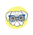 dog pug in blue sunglasses vector image