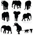elephant black silhouette vector image vector image
