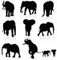 elephant black silhouette vector image vector image