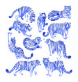 graphic collection tigers in different poses vector image vector image