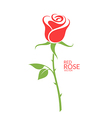 Rose Red flower on white background vector image vector image