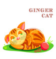 educational flashcard with cat on the grass vector image