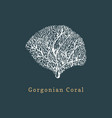 gorgonian coral drawing of vector image